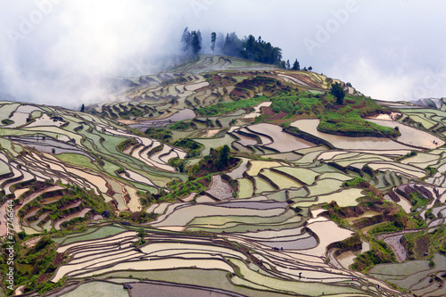 Garden Poster Rice fields Terraced rice field in Yunnan province, China