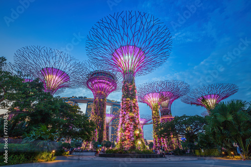Night view of The Supertree Grove at Gardens by the Bay in Sing