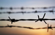 Barbed Wire at Sunset