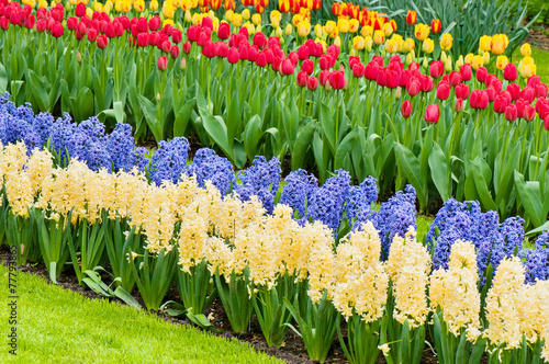 Valokuvatapetti Vibrant flowerbed spring flower park