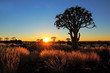 canvas print picture Quiver trees and grasses at sunrise