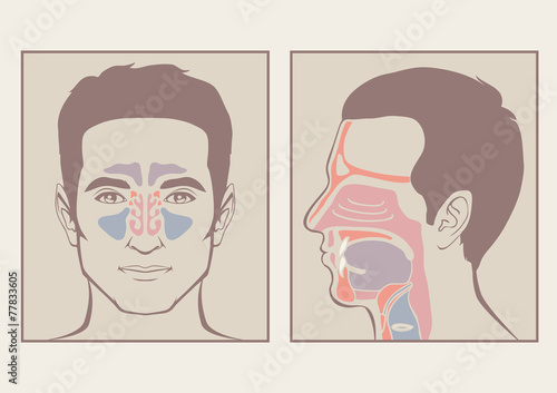 nose, throat anatomy, human mouth, respiratory system - Buy this ...