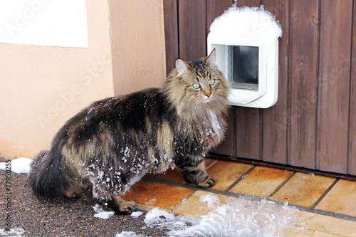 Foto Katzenklappe