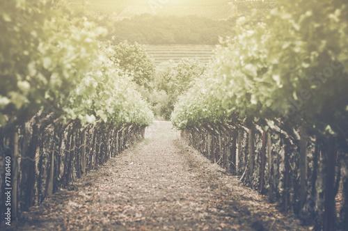 Garden Poster Vineyard Retro Vineyard with Sunlight