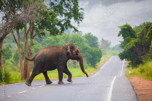 Obrazy na płótnie Canvas Elephant