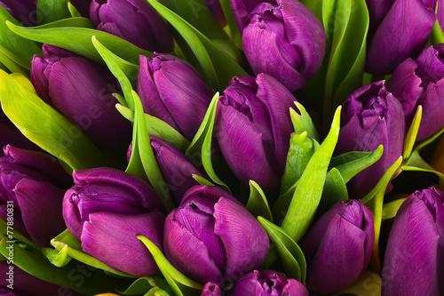 Poster Tulp Nature bouquet from purple tulips for use as background.