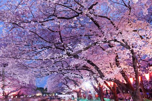 Foto op Plexiglas Kersen 上野公園の夜桜