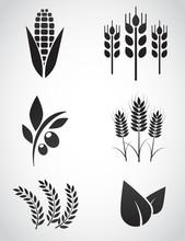 Plantation Vector Icon Set.