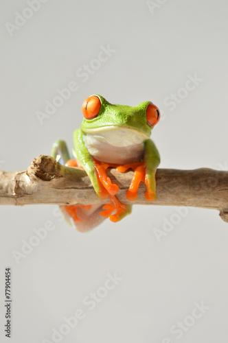 Türaufkleber Makrofotografie Red eye frog