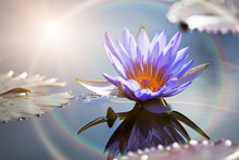 Lotus Flower With Sun Flare