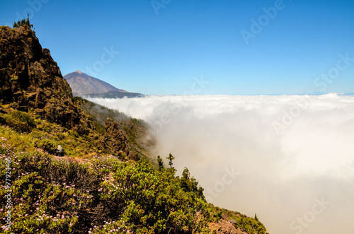 Poster Afrique du Sud High Clouds over Pine Cone Trees Forest
