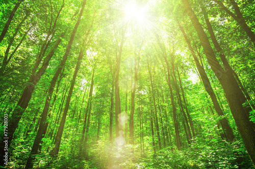 Wall Murals Forest spring