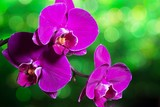 Trzy orchidee na zamazanym tle
