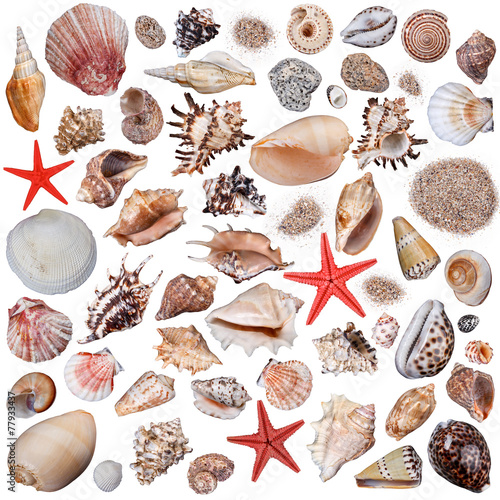 Carta da parati Shells collection