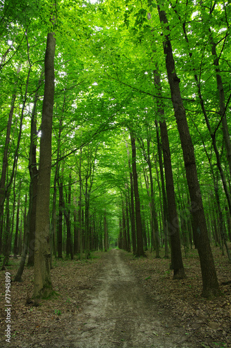 Foto auf Gartenposter Wald forest