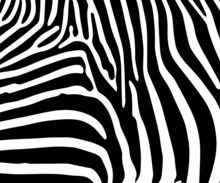 Zebra 1002