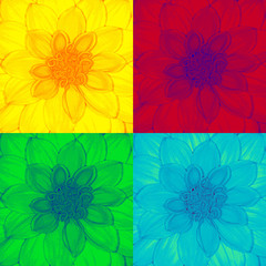 Fototapeta Dahlia flower in pop-art style