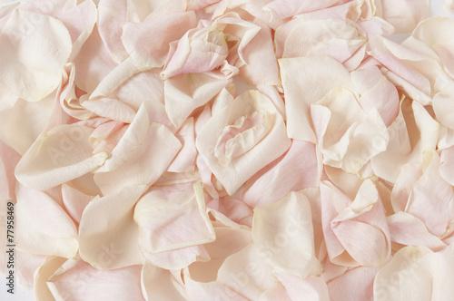 Fototapety, obrazy: Pink rose petals background