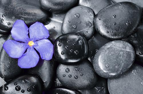 Foto op Canvas Zen Flower oleander and stone. Zen and Spa.