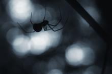 Creepy Spider Silhouette At Ni...