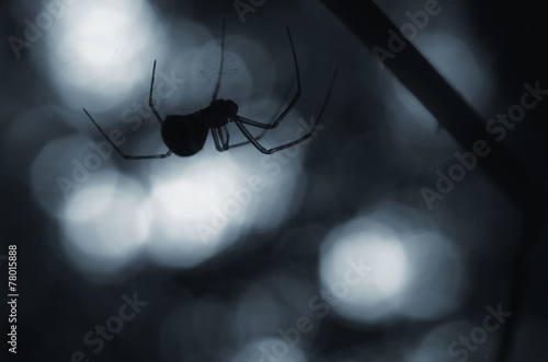 creepy spider silhouette at night