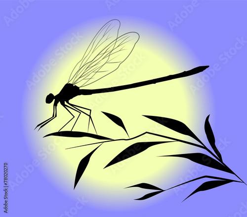 Fotografie, Obraz  silhouette di libellula