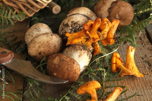 Obraz na plátně champignons