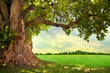 canvas print picture - Spring meadow with big tree with fresh green leaves