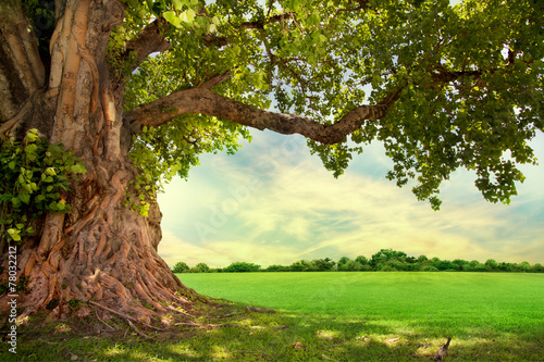 Spring meadow with big tree with fresh green leaves