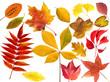 canvas print picture - Herbstblaetter; bunt; leuchtend; Blatt; Blaetter;