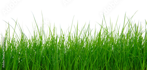 Green grass on white background #78059434