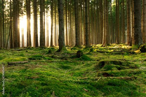Fotografie, Obraz  Lichtblick im Wald