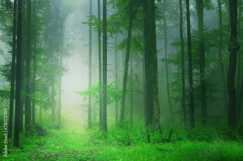 Fantasy green forest background