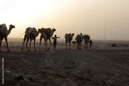 Fotografering  Caravan of camels with salt in Danakil depression desert