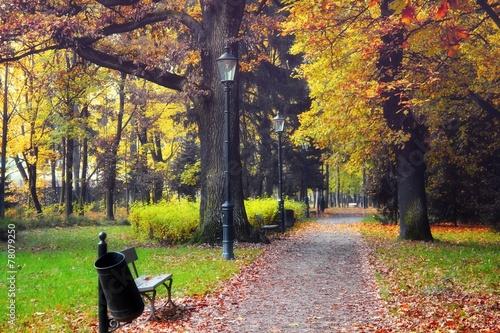 Foto op Canvas Herfst Autumn park scene