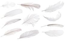Set Of Eleven Light Grey Feath...