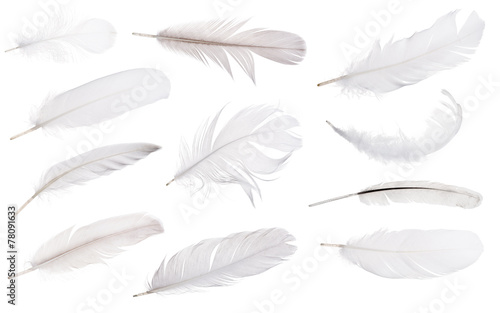 set of eleven light grey feathers isolated on white
