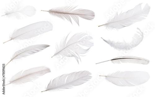 zestaw jedenastu jasnoszarych piór na białym tle