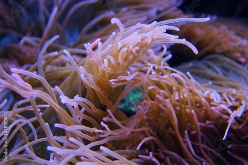 Staande foto Koraalriffen Korallen und Fische