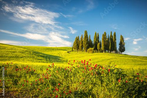Poster Bleu Tuscany at spring