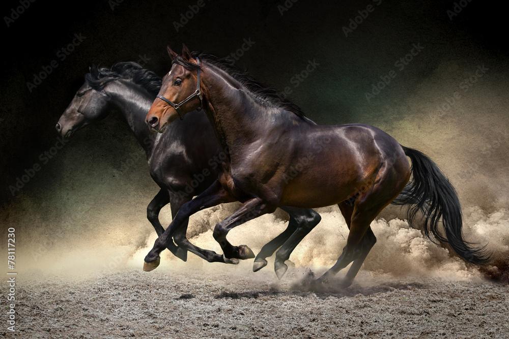 Obraz Horses gallop in desert fototapeta, plakat