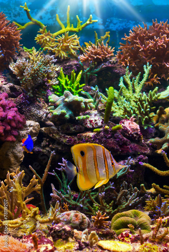Fotobehang Onder water tropical fish on a coral reef