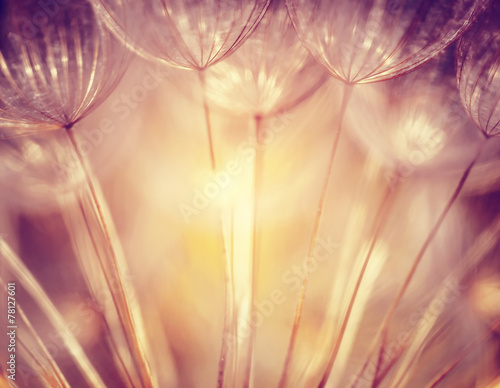 Fotografie, Obraz  Beautiful dandelion background