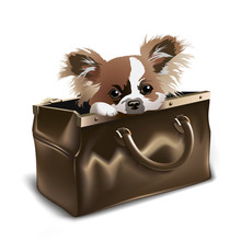 Puppy In Valise