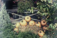 Pumpkin Display - Vintage