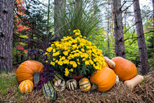 Pumpkin Squash And Flowers