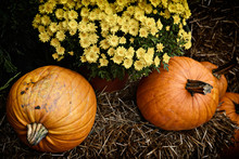Pumpkins And Potted Flowers