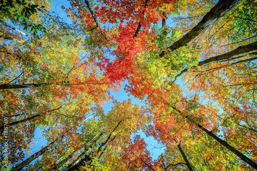 kolorowe-liscie-na-drzewach-jesienia-widok-spod-drzewa