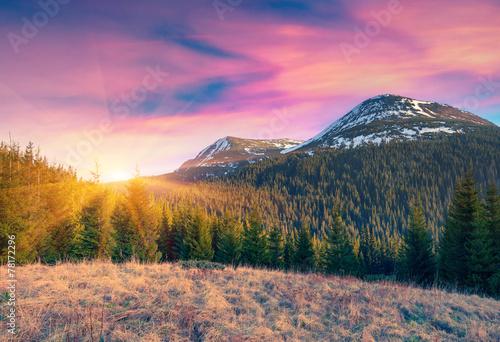 Fotobehang Purper Colorful spring sunrise in the carpathian mountains