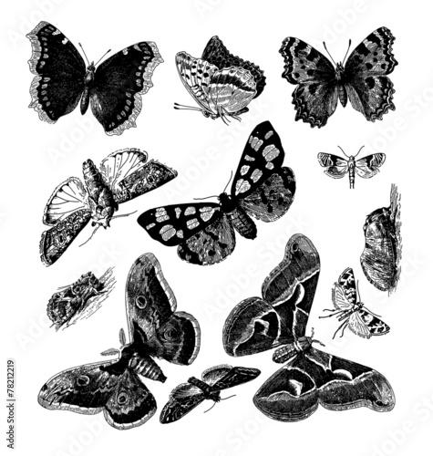 Deurstickers Vlinders in Grunge Butterflies